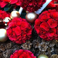 Your Guide to the Perfect Holiday Roses