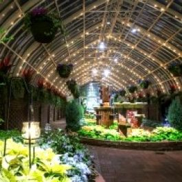 Holiday Flower Show at Phipps Conservatory