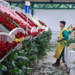 The Importance of Fair Trade to Flowerlink