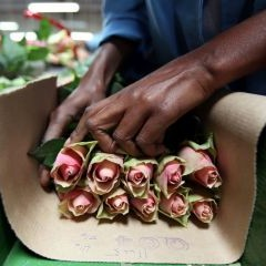 Kenya Could See a Tax Increase on Cut Flowers