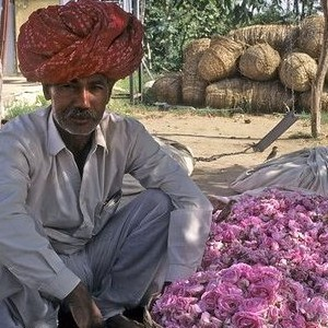 India: Wholesale Roses on the Rise