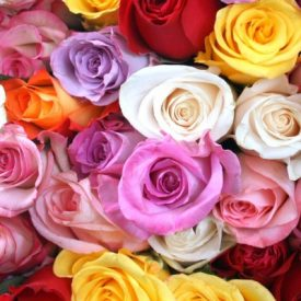 What Does the Color of Wholesale Roses Say?