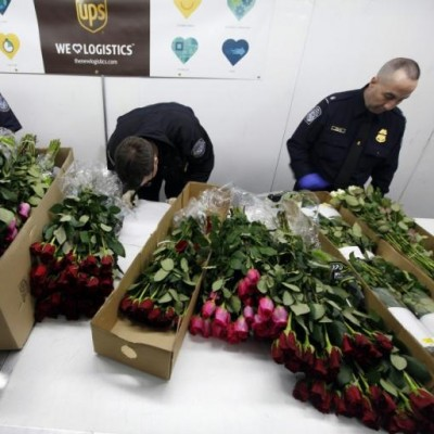 Miami: US Hub for Wholesale Rose Imports