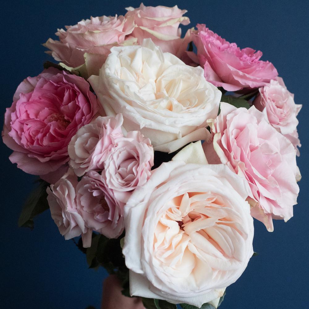 Popular Pink Rose Varieties
