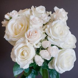 Popular White Rose Varieties