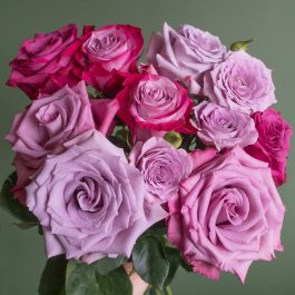 Popular Lavender Rose Varieties