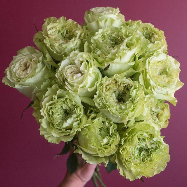 Green Rose Variety Super Green