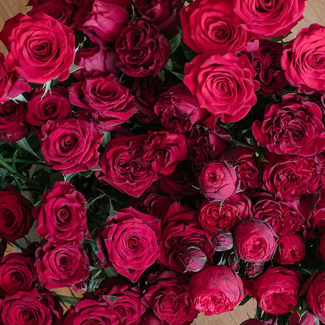 Popular Valentine's Day Red Rose Varieties