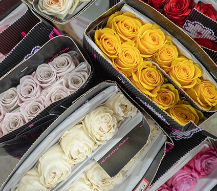 Flowerlink Roses