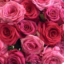 Natalia's 2020 Valentine's Day Rose Variety Favorites